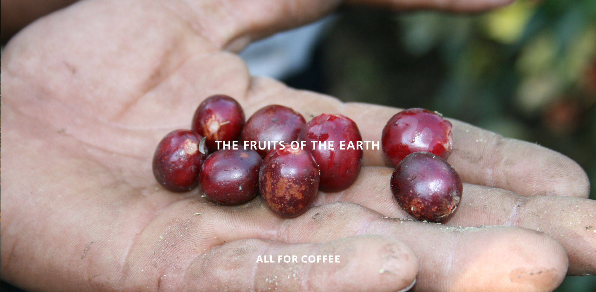 THE FRUITS OF THE EARTH